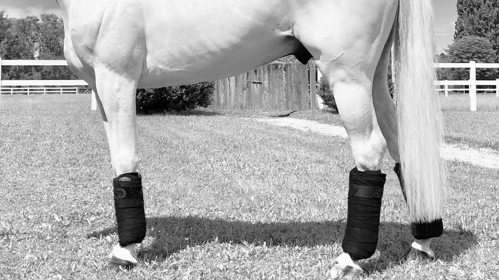 Supports ligamentaires topaze Pro-Confort Horsewear